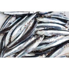 HAMSI FRESH FISH 1 LB